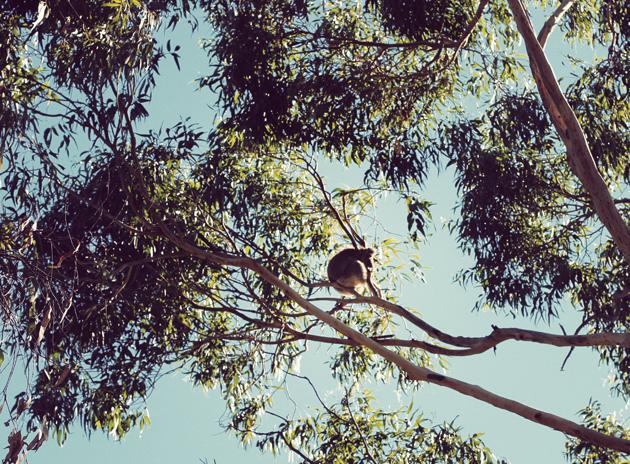 Salut, je suis une boule dans un arbre.