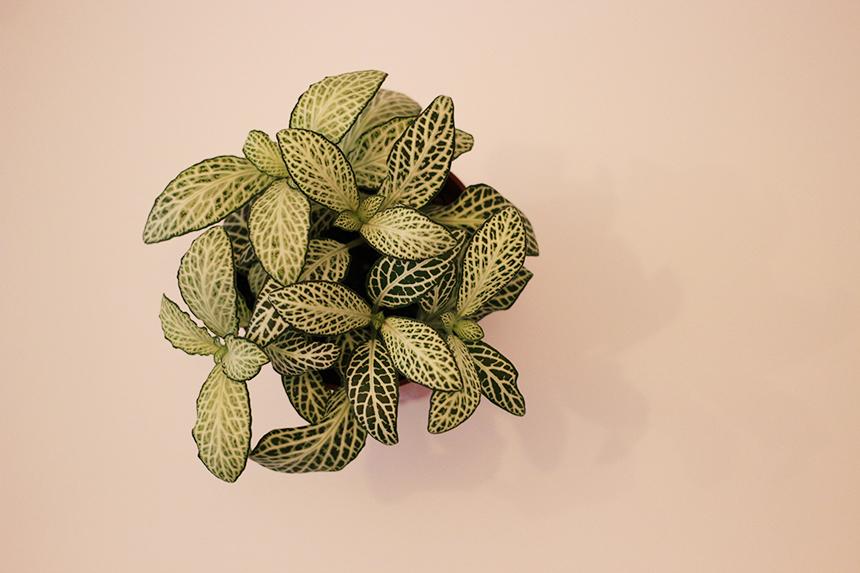 plante-1